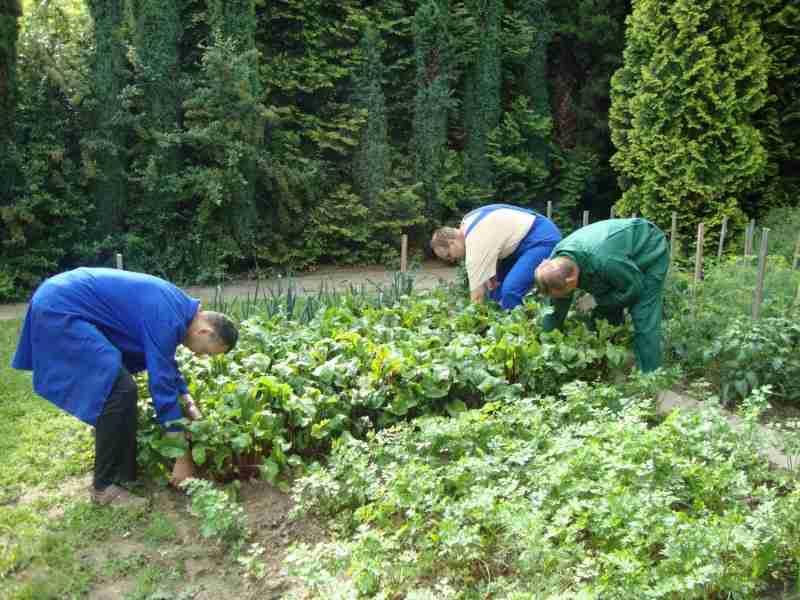 pracownia ogrodnicza (5).JPG