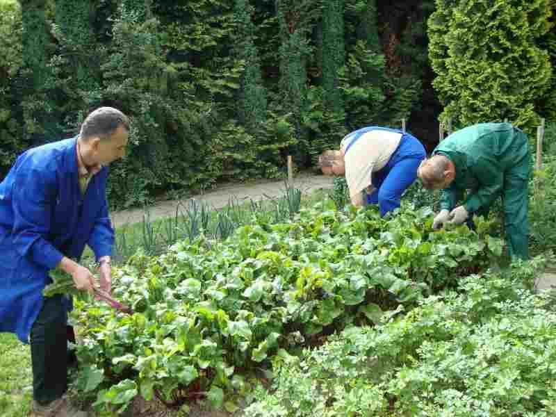 pracownia ogrodnicza (6).JPG