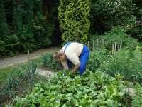 pracownia ogrodnicza (3).JPG
